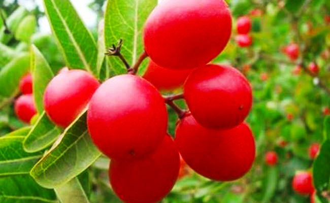 cranberry juice benefits in hindi